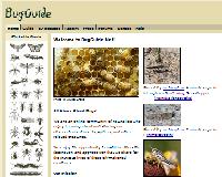 bugguide.net